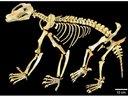 1375813262 dino skeleton