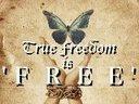 1385359438 freedom