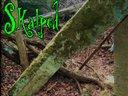Nowhereland album cover