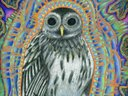 New Wisdom music in owl form