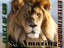 1413624399 so amazing lion 1
