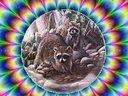 Rabid Raccoon [single]