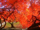 """Walking Geek for """"Tree of Fire.""""  See https://www.flickr.com/photos/wengs/"""