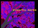 synaptic rates