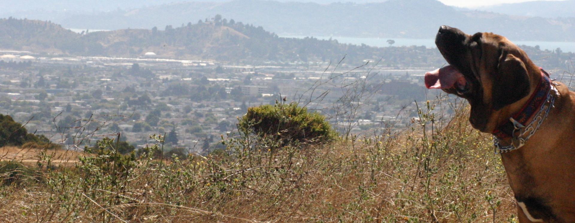 1420725840 rocky on the hills copy