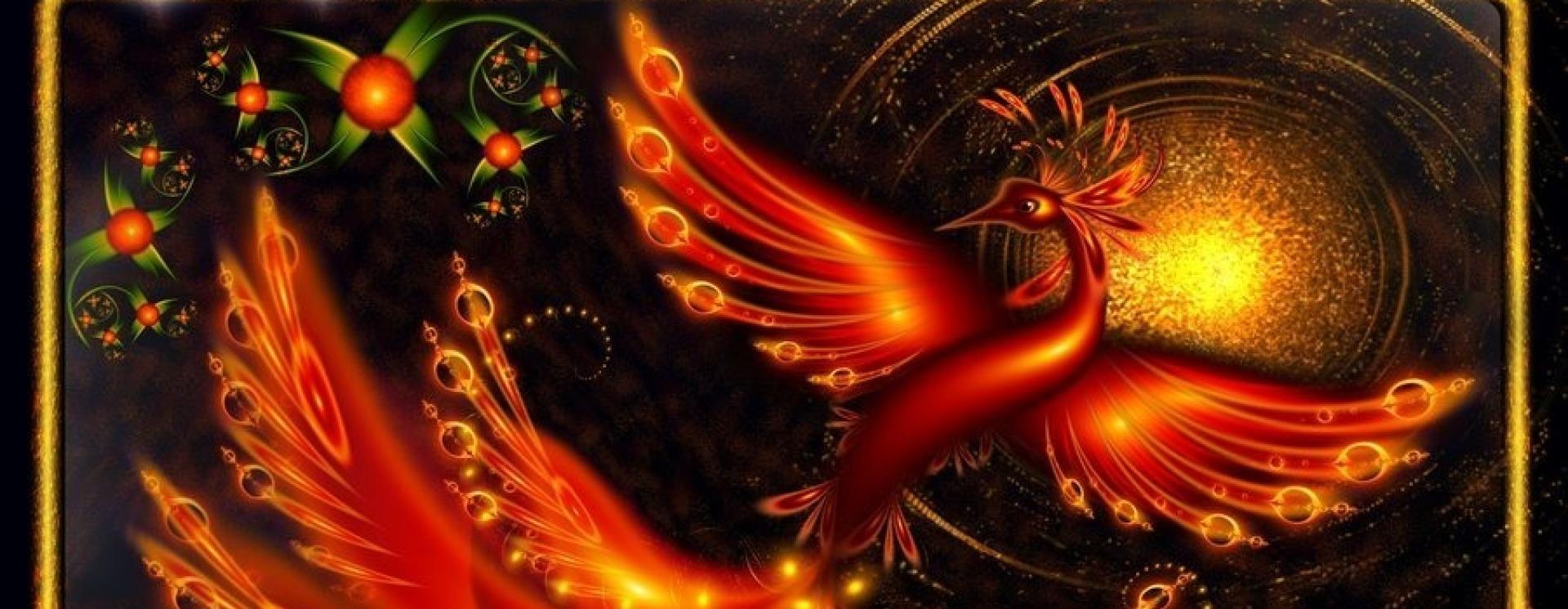 Firebird 6 copy