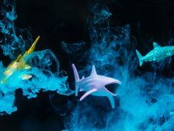 Image for Water Babies + Matt Keegan's K2