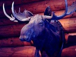 The Blue Moose Lodge