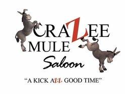 crazee mule saloon