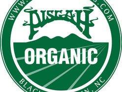 Pisgah Brewing Company