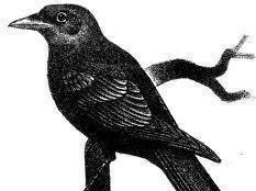 Ravens Tavern