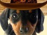 Doggie Dude Ranch