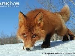 The Red Fox Inn