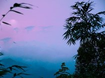 Wutong Shan