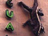 Club Iguana #1 showcase in manhattan